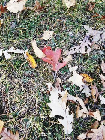 Day Outdoors No People Nature Close-up Autumn Leaves Autumn Colors Autumn🍁🍁🍁