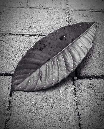 Leaf No People Nature Blackandwhite Folhas Que Caem chão