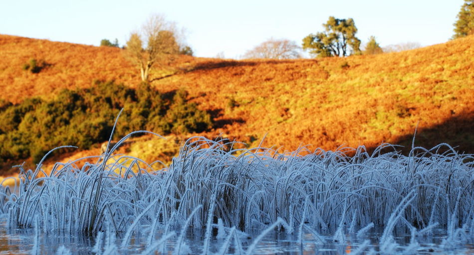 December Scotland Autumn Beauty In Nature Close-up Cold Day Field Frost And Sunshine Frozen Reeds Frozen Water Grass Landscape Nature No People Outdoors Scenics Sky Tree Water