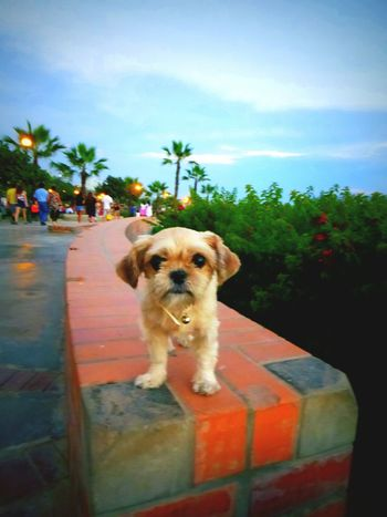 My adorable princess 💫✨❤ 🐕 Pet Photography  My Sunshine  Dog Lover Better Together Check This Out Hello World Enjoying Life Walking Around Pets Corner Summer Dogs