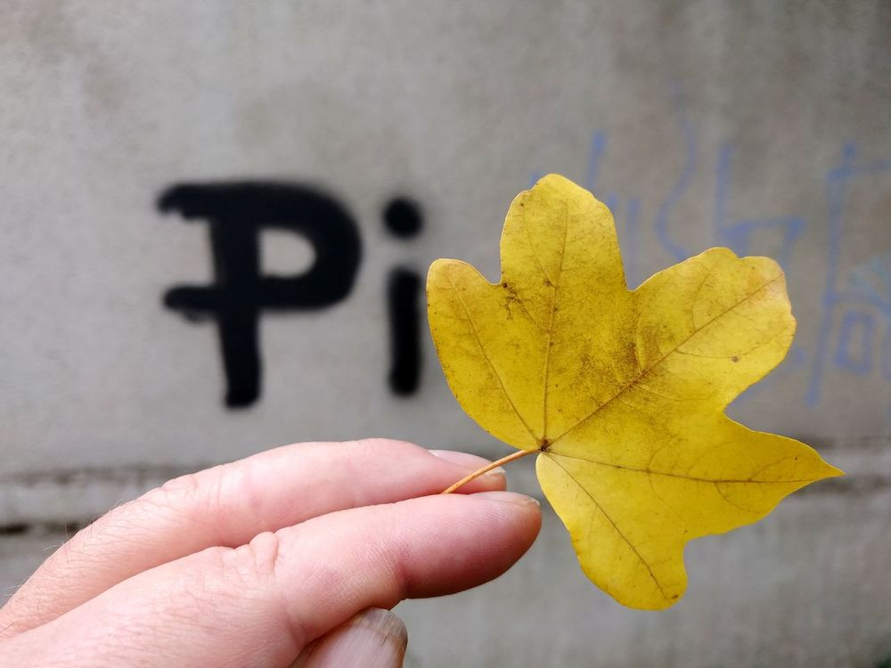 In Hand Pi Human Hand Holding Domestic Life Yellow Close-up Fall Change Maple Leaf Autumn Collection Season  Leaf Vein Autumn Human Finger Finger Leaves Fallen Leaf Personal Perspective