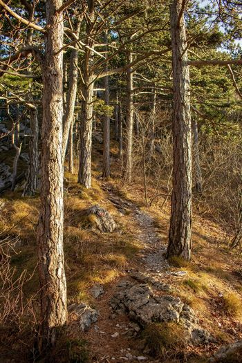 The path Nature Nature Photography Croatia Wilderness Forest Sunset Dusk Colours Golden Hour Sunlight Woods Growing