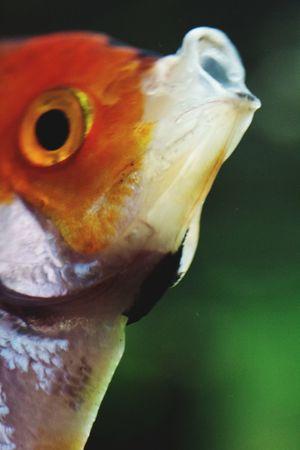 Fisch Animal Fish Sea Life UnderSea Close-up