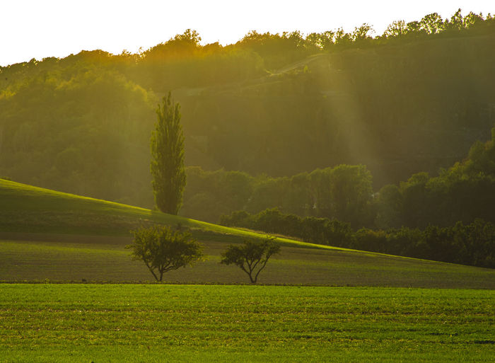 Plant Land Tree