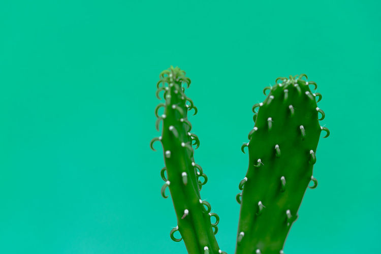 Close-up of wet plant against blue background
