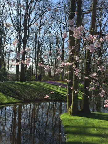 Showcase April This Photo was taken in Keukenhof The Tulips garden festival In the Netherlands! The Garden opens once a year and that's from (March-May)