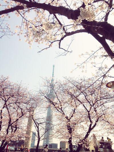 隅田公園 Sakura 桜 サクラ Hello World EyeEm Skytree