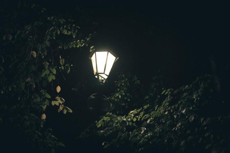 Close-up of illuminated plants at night