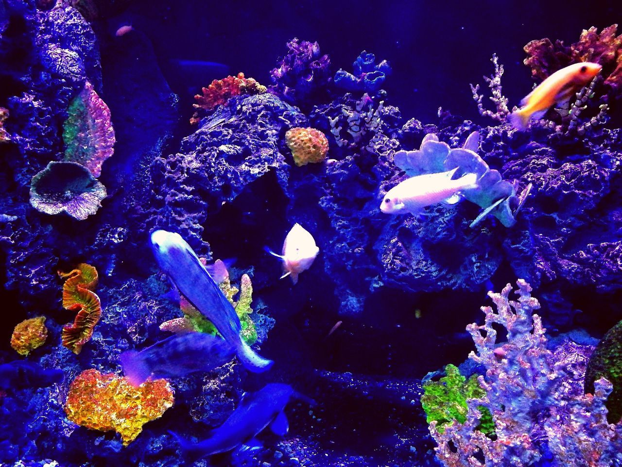 underwater, sea life, water, swimming, animal themes, fish, animals in the wild, undersea, nature, no people, large group of animals, aquarium, coral, beauty in nature, blue, animal wildlife, sea, close-up, indoors, day