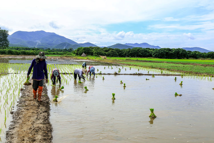 People working in agricultural field against sky