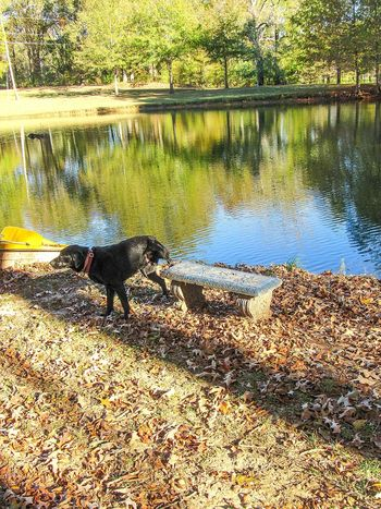 FUNNY ANIMALS Funny Dog Dog Dog Hiking Dog Peeing Bench Bench By The Water Sitting Spot Favorite Places Water Reflections Perfect Timing Animal Themes Life That's Life Labrador Labrador Retriever Black Dog Real Life One Animal Animals In The Wild Outdoors Water Day Nature Sunlight