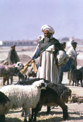 Afghani Man at Market Afghani Man Afghanistan Animal Themes Beard Black Sheep Blue Sky Close-up Composition Farmer Focus On Foreground Incidental People Inspecting Kabul Man Market Outdoor Photography Portrait Sheep Sunlight And Shadow Traditional Clothing White Sheep