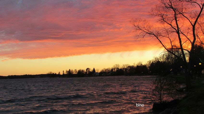 Evening View Cloud - Sky Multi Colored Around The Lake Chilly Weather Windy Bare Tree Silhouette Lake Cadillac Pure Michigan