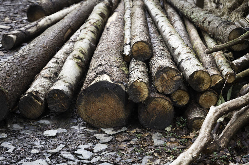'Log Pile' Destruction Cut Down Day Deforestation Environmental Issues Felled Trees Firewood Forest Fossil Fuel Land Log Log Pile Logs Lumber Industry Natural World Nature No People Outdoors Pile Of Logs Stack Timber Trunks Wood Wood - Material Woodpile