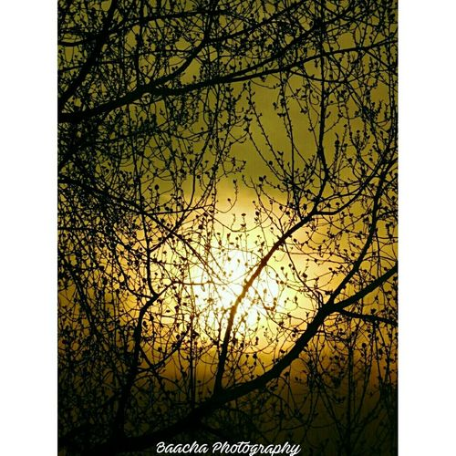 Sunset Sunset Sunset_collection Sunshine Treebranches Baachaphotography Tree Bare Tree Outdoors Nature Growth Silhouette Branch Autumn Sky Beauty In Nature No People Day First Eyeem Photo