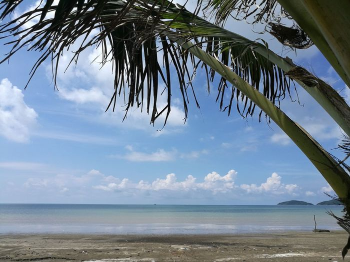 Beach Water Sea Tree Nature Tropical Climate Tranquility Sky Horizon Over Water Cloud - Sky Summer Sand Day Outdoors Beauty In Nature No People Vacations Blue Leaf Palm Tree