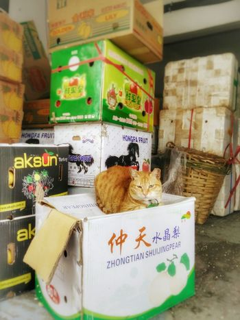 Cat which left his/her foot on my foot a while back Cat♡ Cat Lovers Cats Cats 🐱 Catlovers Cat Photography Cat Watching Catlover Cat Neighborhood Neighbor Neighbourhood Cat Neighbourhood Neighbors Garage Fruits Fruits And Vegetables Boxes Chinese