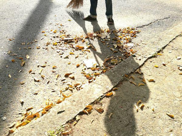 """""""Scavenger"""" Day Outdoors Scavenger Scavenging Scavenger Hunt Scavengers ScavengerShot ScavengerHunt Road Leaf Dry Leaf"""