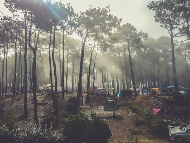 Beauty In Nature Camping Forest France Nature Outdoor Photography Outdoors Pine Trees Sunlight Tent Travel Photography Traveling WoodLand Www.gonetosee.de Camp