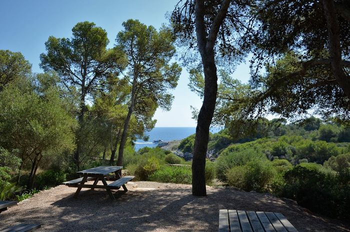 Mediterranean Coast Mediterranean Landscape Absence Beauty In Nature Bench Conifers Day Green Color Growth Nature No People Outdoors Park Park - Man Made Space Park Bench Pines And Sea Plant Relaxation Seat Sky Sunlight Tranquility Tree Tree Trunk Trunk