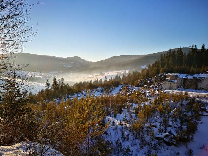 Winter Tree Landscape Nature Sky Outdoors
