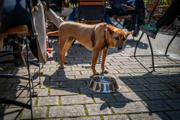 Dog in Frankfurt Mammal One Animal Domestic Animals Domestic Pets Animal Themes Dog Canine Animal Incidental People Vertebrate Street City Footpath Shadow Sunlight Day Pet Leash Leash Standing Outdoors Paving Stone