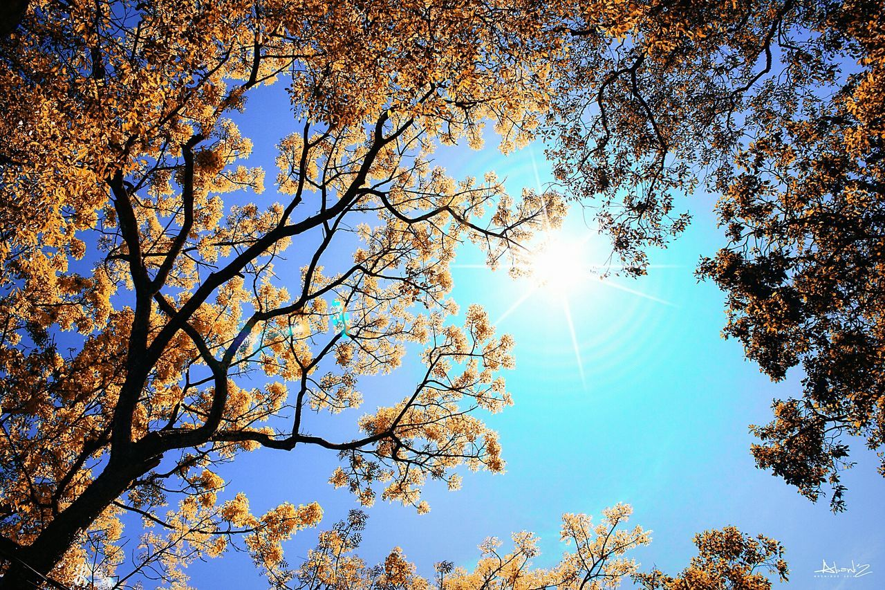 tree, sunbeam, sunlight, sun, low angle view, nature, beauty in nature, branch, lens flare, growth, day, blue, no people, bright, sky, outdoors, tranquility, scenics, leaf, vapor trail