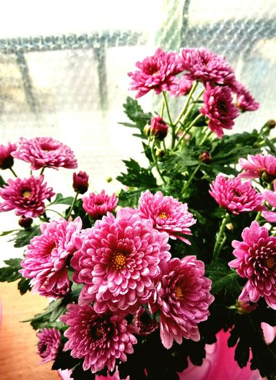 Flower Pink Color Nature Fragility Petal Freshness Plant Flower Head Beauty In Nature No People Growth Close-up