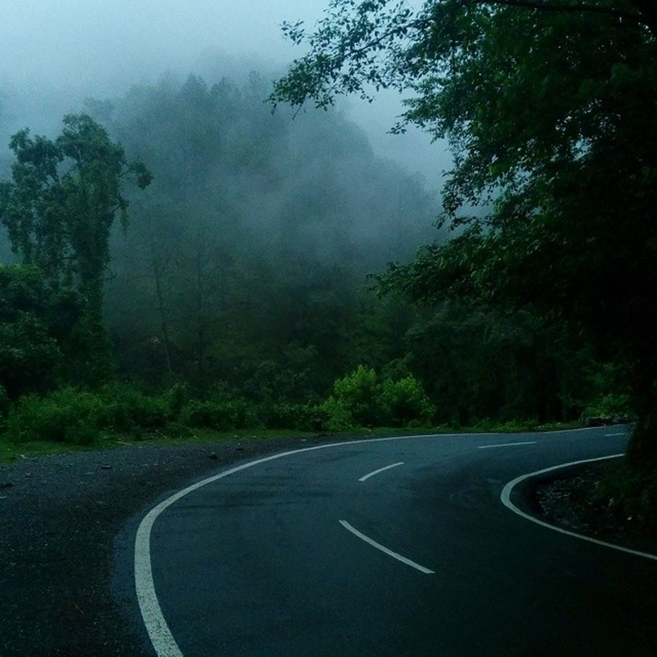 EMPTY COUNTRY ROAD ALONG TREES IN FOREST DURING FOGGY WEATHER