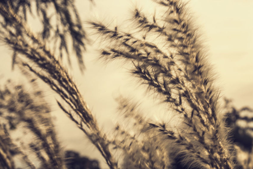 Afternoon Backdrop Background Beauty In Nature Contrast Dark Darkness And Light Death Depression Evening EyeEm Best Shots Grass Growth Melancholy Memento Mori Nature Overcast Poetic Reed Sadness Schilf Sky And Clouds Texture Tranquil Tranquility