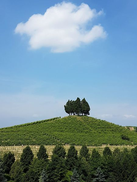 Nature Cloud - Sky Outdoors Beauty In Nature No People Tree Green Color Day Growth Sky Scenics Tree Area Roero Piedmont Italy Langhe Vineyard