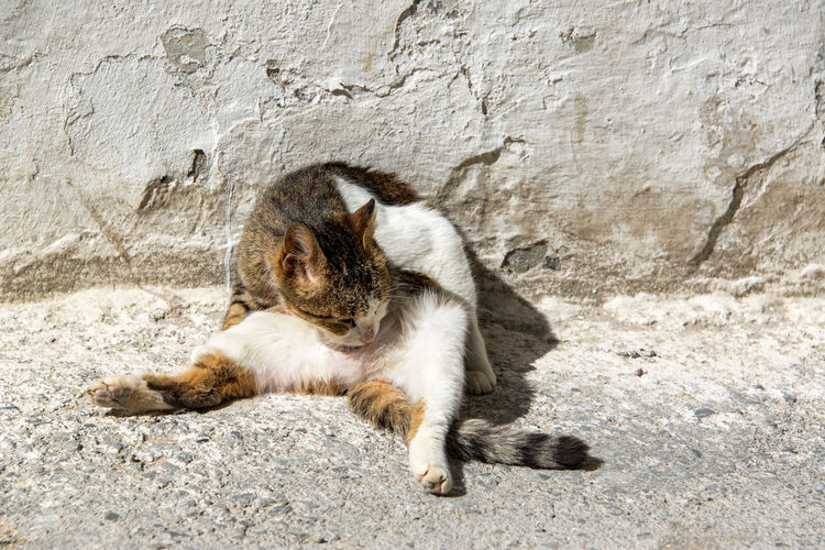 Cat sitting on rock against wall
