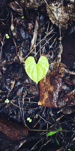 Nature 💚 Heart
