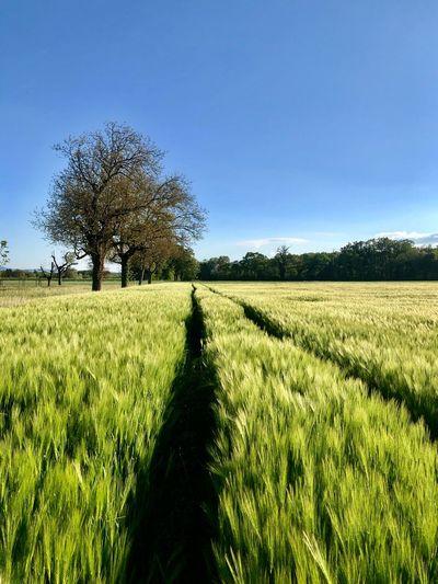 Field Plant Sky