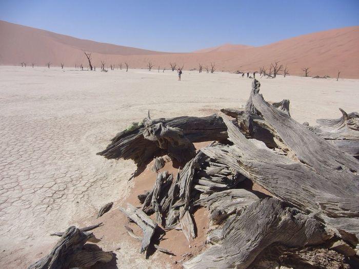 Drift wood in desert