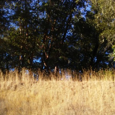 Boonville Tree Growth Nature Field Outdoors Night Landscape Beauty In Nature Tranquility No People Grass Scenics Rural Scene Freshness Tranquility Sky Beauty In Nature Autumn Boonville Ca Nature Vinyardsunset Tree Forest Backgrounds Architecture