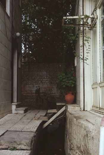 Architecture Brick Wall Building Exterior Glass Indoors  IPhoneography Iran Potted Plant Transparent Wall - Building Feature