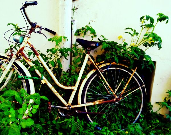 Old enough to be artistic... Bycicle Old Taking Photos Enjoying Life Old Is Beautiful Check This Out Artpeace Hello World In The Middle Of Nowhere Nature EyeEm Best Shots Eyem Gallery