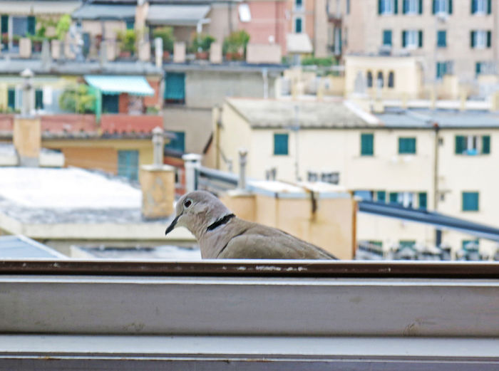 Architecture Bird Building Built Structure City City Life Close-up Day Focus On Foreground No People Outdoors Selective Focus Turtledove Visitor