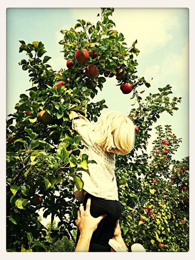 Onalee picking apples!!