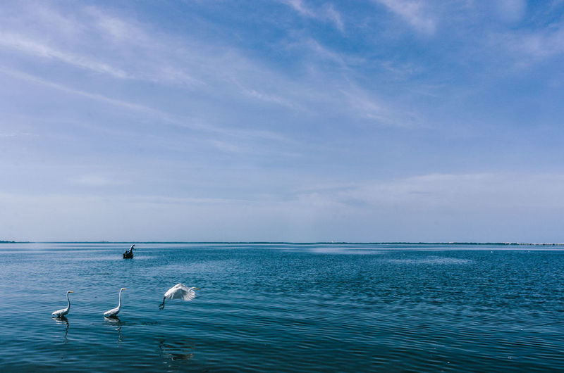 Swans swimming in sea against blue sky