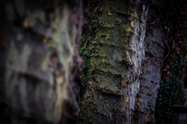 Trees Growth Plant Tree No People Tree Trunk Trunk Moss Close-up Nature Day Green Color Selective Focus Textured  Outdoors Focus On Foreground Land Beauty In Nature Full Frame Old Forest