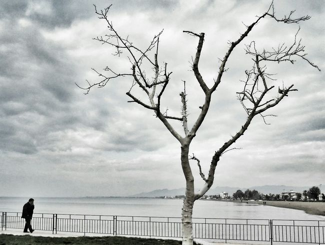 Stand Out From The Crowd Loneliness Deadtree Seaside Leafless Getting Inspired People