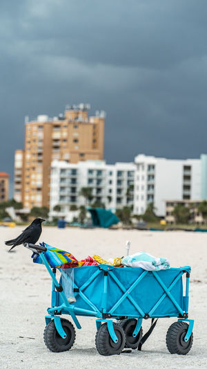 black crow sitting on top of a blue cart on sandy beach against hotels and dark clouds in background