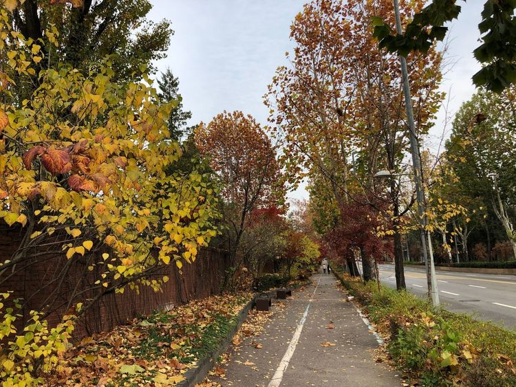 Lonely Fall Plant Tree Growth Nature The Way Forward Sky Direction Road Outdoors Yellow Autumn Beauty In Nature No People