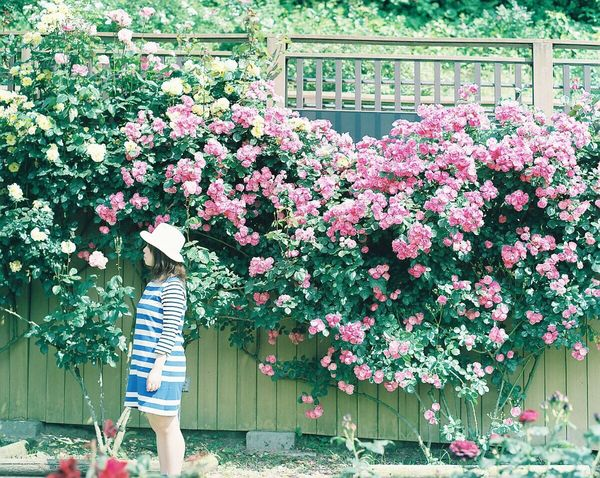 薔薇の香りが好き Film Photography Portrait 120 Film Filmcamera PENTAX67 Pro400H EyeEm Best Shots Flowers Flowerporn