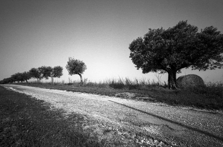 idmphotographer.com Beauty In Nature Blackandwhite Day Film Photography Filmisnotdead Grain Growth Harsh Light High Contrast Bnw Ilford Pan F50 Italy Natural Light Nature No People Outdoors Road Rural Rural Road Rural Scene Sky Tranquil Scene Tranquility Tree Vertical Lines Wide Angle