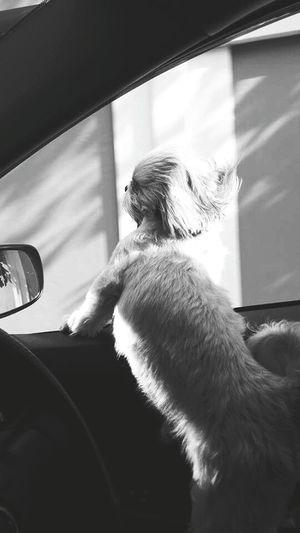 I Love My Dog ❤🐕 Lovemelovemydog Mylivingcompanion Mypet Drive Me Home