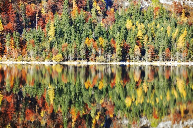 Colorful Salzkammergut Austria Altaussee Autumn Tree Change Reflection Nature Beauty In Nature Lake Scenics Tranquil Scene No People Tranquility Water Day Outdoors Mountain Forest