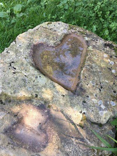 Nature Outdoors Beauty In Nature Heart Shape No People High Angle View Day Textured  Close-up
